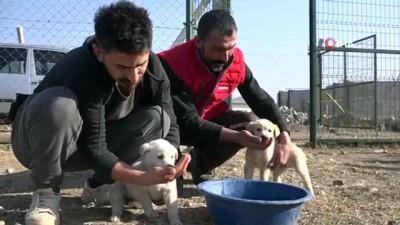 cevre temizligi -  Sokak hayvanları için seferber oldular