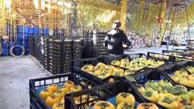 Dalında tanesi 1 liradan satıldı, çiftçiye 6 bin fidanı dağıtıldı