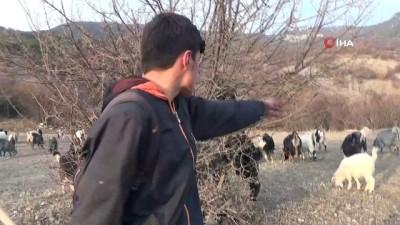 - Genç çobanın hedefi veteriner olmak