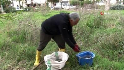 Antalya'da korkutan balık ölümleri...Köpüren ve kötü kokan derede binlerce balık telef oldu, martılar ölü balıklara üşüştü