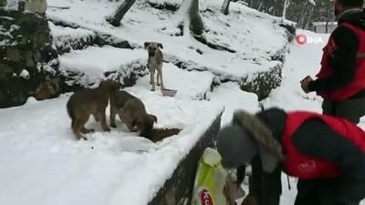 balaban -  Karda aç kalan sokak hayvanlarını su ve mama bıraktılar
