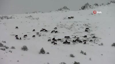 kamera -  Afyonkarahisar'da yılkı atlarının doğa ile mücadelesi kamerada