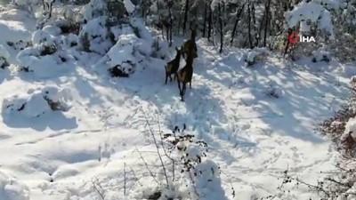 En şanslı geyikler... Üniversite bakıyor, milli parklar besliyor