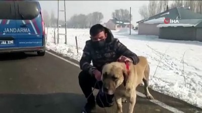 Sokağa çıkma kısıtlamasında kaybolan köpeği jandarma buldu
