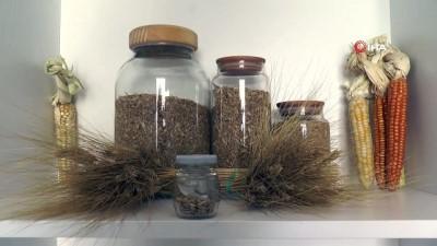 7 bin yıllık tohumlar Bodrum'da başak verecek