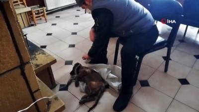 Donmak üzere bulduğu yavru köpeği saç kurutma makinesiyle 7 saat ısıttı