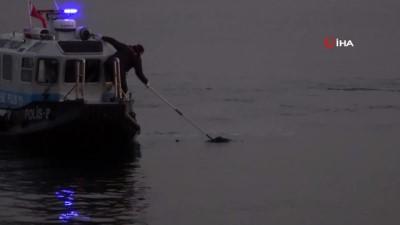 alabalik -  Pendik'te denizden erkek cesedi çıkarıldı
