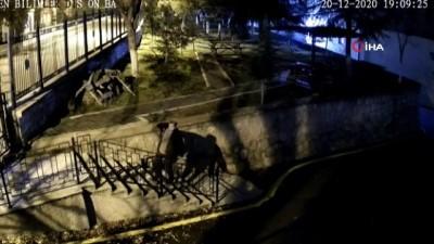 Üniversite kampüsüne dadanan hırsız önce kameraya ardından polise yakalandı