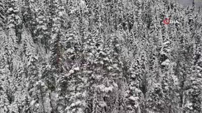 'Anadolu'nun yüce dağı' Ilgaz'da doyumsuz 'kar' manzaraları