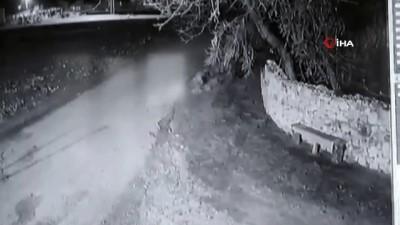 - Bahçe duvarından atalayarak buzağı çalan hırsızlar güvenlik kamerasında