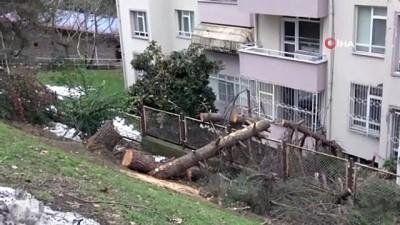 Kar ağaçları kökünden söktü