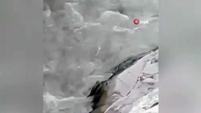 Nesli tükenme tehlikesi altında bulunan su samurları bu kez grup halinde görüntülendi