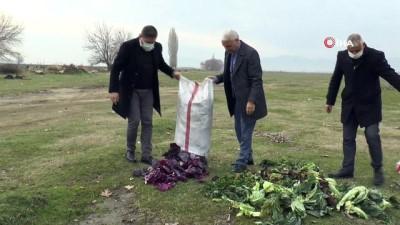 hanli -  Saruhanlı Belediyesi yaban hayvanlarını unutmadı