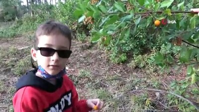 Şifa deposu meyve ormanda bedava