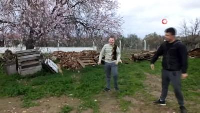 Balıkesir'de badem ağaçları kış ortasında çiçek açtı