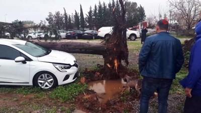 guvenli bolge -  Devrilen ağaç otomobili pert etti