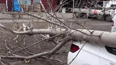 gard -  Şiddetli rüzgardan kırılan ağaç otomobilin üzerine düştü