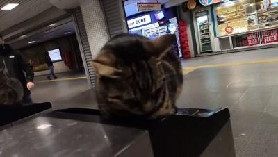 metro istasyonu -  Soğuktan etkilenen kediler akbil turnikelerinde ısındı