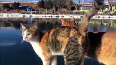 cildir golu -  Korona Çıldır Gölü'nü sessiz bıraktı Videosu