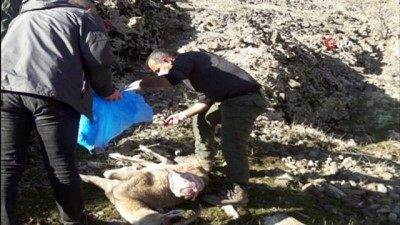 - Tunceli'de 8 yaban keçisi telef oldu, inceleme başlatıldı