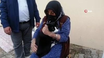 rontgen -  Kedisini severken gelen sertliği hissetti, soluğu jandarmada aldı
