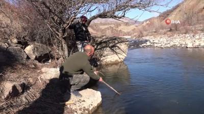 Tunceli'de suya elektrik verildi, çok sayıda balık telef oldu