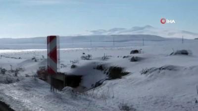 Kars'ta yaralı kurt köy yoluna indi