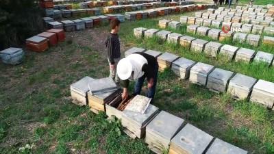 pazar gunu -  Adana'da milyonlarca arı telef oldu