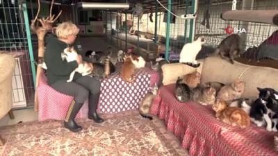 ilginc goruntu -  Sokaklardan topladığı tam 250 kediye ev sahipliği yapıyor