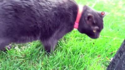 sokak hayvanlari -  Hayatta tuttu, yürüttü, çocuğu gibi baktığı 'kedi' 5 yıldır mutlu