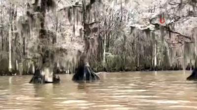 ilginc goruntu -  - ABD'de göldeki ağaçlar dondu