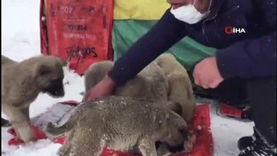 sokak hayvanlari -  Kış gününde içleri ısıtan, 'insanlık ölmemiş' dedirten davranış...Yol kenarındaki yavru köpekler için kulübe yaptı