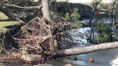 Kıyı erozyonu birçok ağacı kökünden söktü
