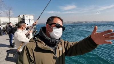 olta - İSTANBUL - Karaköy İskelesi'nde ölü yunus bulundu