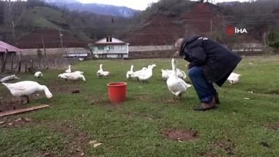 bag kur -  Kazlarıyla konuşuyor, tüm gününü onlarla geçiriyor