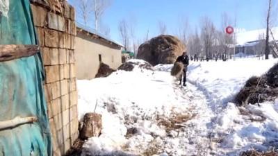 hayvan -  Bataklığa saplanan ineklerine sarıldığı görüntülerle hafızalara kazınmıştı, Mehmet Emin amca bu kış daha mutlu