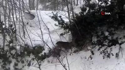 hayvan -  Dereye düşen karacayı kepçe operatörü kurtardı
