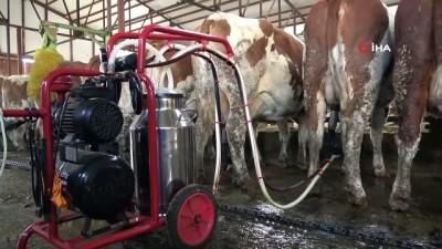 hayvan -  - Devlet desteğiyle kurulan süt çiftliği Avrupa standardında hizmet veriyor