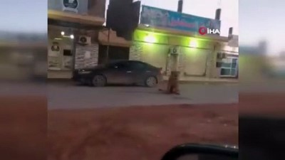 hayvan -  - Libya'da sokakta dolaşan aslan paniğe neden oldu