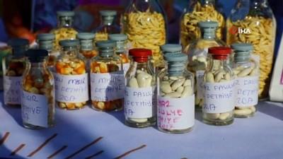 ermeni -  Büyükşehir, yerel tohumların dağıtımına başladı
