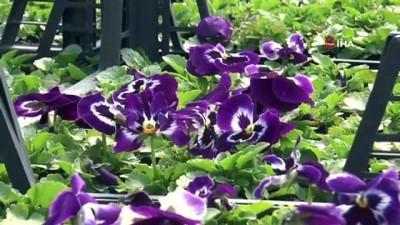 Kütahya Belediyesi iki tesisinde yılda 1 milyona yakın çiçek ve fidan üretiyor