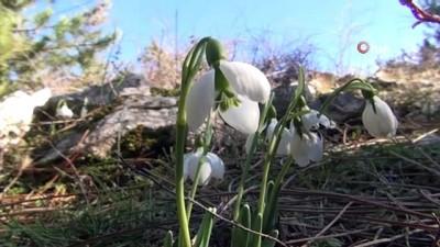 ermeni -  Bu çiçeği koparmanın cezası 80 bin 465 lira