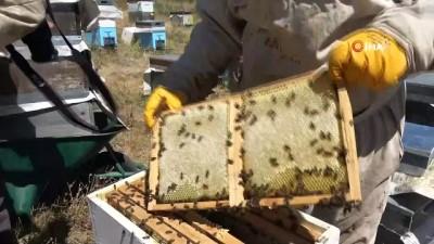 bal arisi -  Sivas arısı tescil yolunda