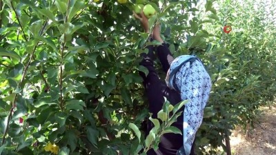 (ISPARTA- Depoda 2.80 TL'ye satılan elma market ve pazarlarda 8-10 TL