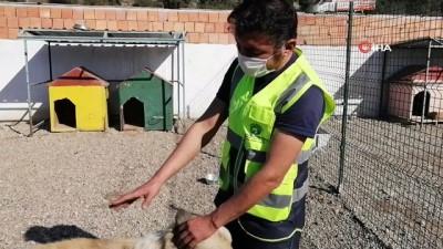 rontgen -  Av tüfeğiyle vurulan köpek tedaviye alındı