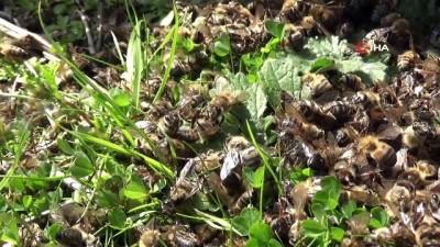 bal arisi -  Manisa'da zehirlenen binlerce arı telef oldu