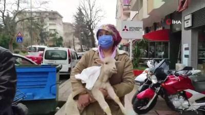 rontgen -  Yaralı kuzuyu kucağında bebek gibi böyle taşıdı