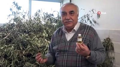 agri kesici -  Endemik bitkiler eterik yağ ihracatını arttıracak