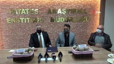 Yerli patates tohumları Saruhan ve Niğşah satıldı