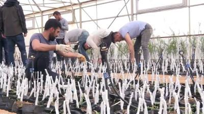 BİNGÖL - Üretilen ceviz ve badem fidanları, 8 ilde toprakla buluşturulacak